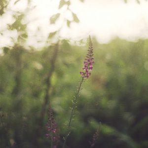 Nature Photography Prints